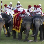 Elephant polo ends in Jaipur,  but elephant use & abuse in tourism continue