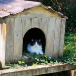 What to call cats, & why it matters:  evolving terms