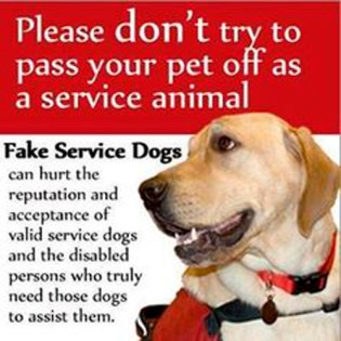 Fake Service Dogs