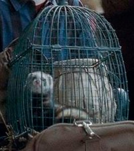 "Caged ferret in the Harry Potter film ""Deathly Hallows,  part 2."""