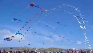 Makar Sankranti kite launch.