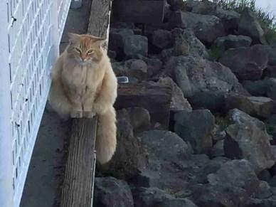 Feral cat in Alameda, California. (Geoff Geiger photo)