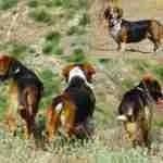 Meeka,  Gini Barrett's dog