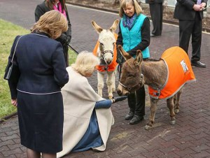 The Duchess of Cornwall with a couple of jackasses & several unidentified people at the inauguration of The Brooke USA. (Brooke Hospital for Animals photo)
