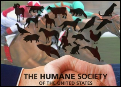 HSUS and horse racing