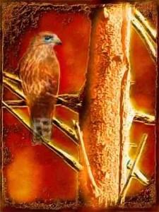 Hawk on tree in a wildfire
