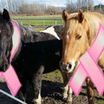 Are drugs based on pregnant mare's urine making a comeback?