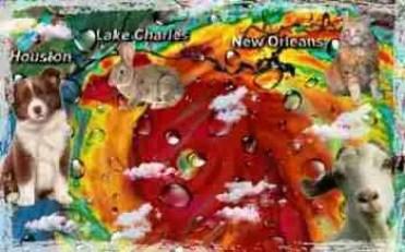 Hurricane Laura collage