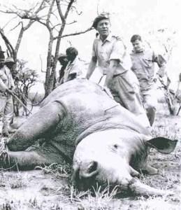 Ian Player during rhino capture circa 1960.