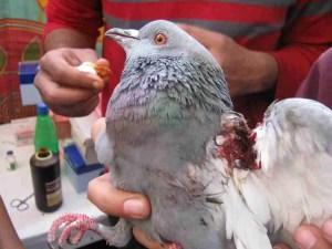(Plant & Animal Welfare Society photo)