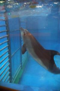 Dolphin exhibit at the Beijing Zoo.  Photo by Sasha Abdolmajid,  relayed by Ric O'Barry.