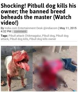 India pit bull attack