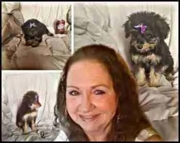 Julia Hudson puppy mill breeder