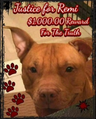Justice for Remi the pit bull