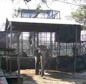 Kathmandu Zoo elephant. (MC)