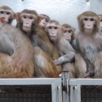 NIH kills one of last legacies of vivisector Harry Harlow