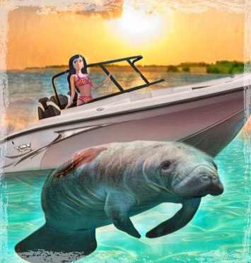Manatee and boat