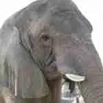 Humane Society of the U.S. & codefendants pay Ringling Bros. circus $15.75 million