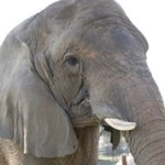 Humane Society of the U.S. & codefendants pay Ringling Bros. circus $15.75 million