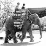 Elephants no longer part of Indian Republic Day parades