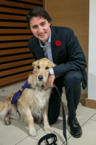 Justin Trudeau meets Flicka, a trained service dog. (myptsdservicedog.com)