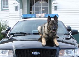 Police dog in Newport, Oregon.