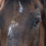 More raids in horse-meat-sold-as-beef scandal