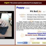Albuquerque Animal Welfare Department #2 and behaviorist allege neglect of public safety in pushing pit bull adoptions