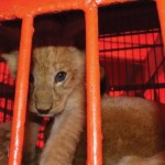 Netherlands & Mexico ban wildlife use in circuses