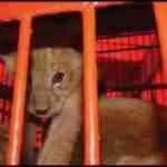 Wildlife veterinarian Mel Richardson,  63