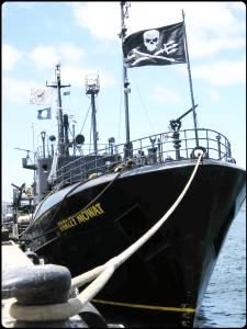 Sea Shepherd vessel Farley Mowat
