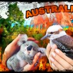 Helping animals through the Australian firestorm