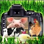Camera animals