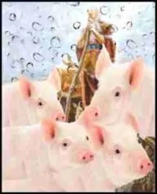 Noah & pigs