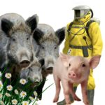 Lithuania advised against plan to kill 90% of wild boars to fight African swine fever