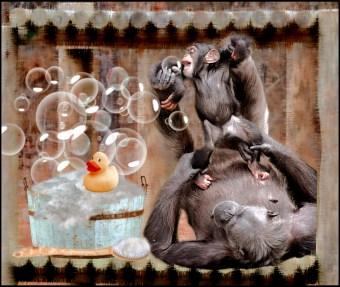 Mama and baby chimp with bathtub
