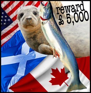 US, Scottish and Canada flags with seal and salmon