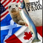 Seal-shooting salmon farmers have a £5,000 price on their heads