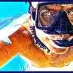 Sharkwater maker Rob Stewart,  37,  saved five million sharks' lives