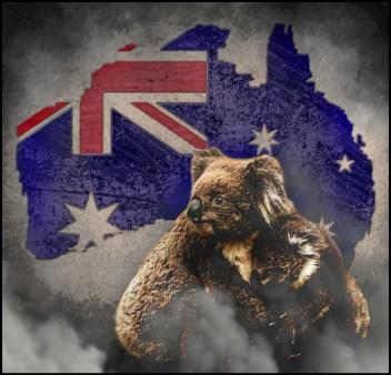 Australia fire koalas