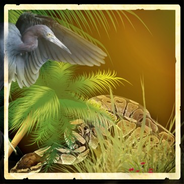 python & blue heron