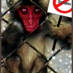 """Ethnic cleansing"" kills 57 Japanese snow monkeys"