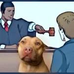 """Judges hit """"mindboggling arrogance"""" in pit bull attack cases"""