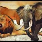 Trump words had no teeth: elephant & lion trophy imports resume