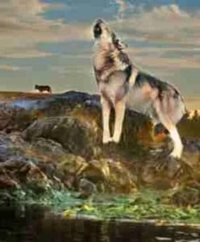 Takaya sea wolf