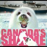 Seal hunting in Atlantic Canada nears a bitter,  bloody end