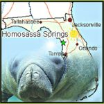 Favor to speedboaters: Trump administration downlists manatees