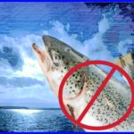 Washington bans Atlantic salmon sea pens––what's in it for the fish?