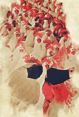 Covid-19 hens