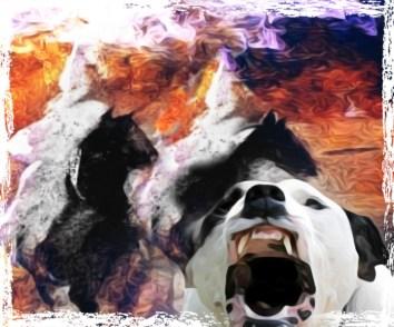 KKK & pit bull
